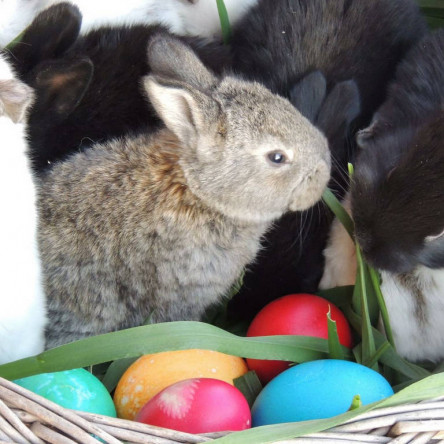Easter celebrations at Seven boutique villa